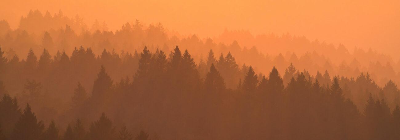 Bosque naranja llamas