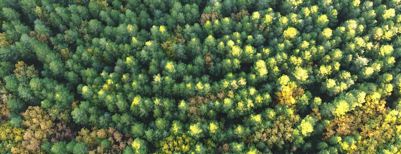 Imagen aérea de un bosque desde una aeronave no tripulada